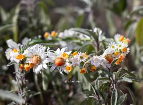Victoria Blumenkranz Orange-01